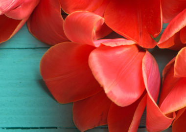 Wedding-colors---coral-and-teal